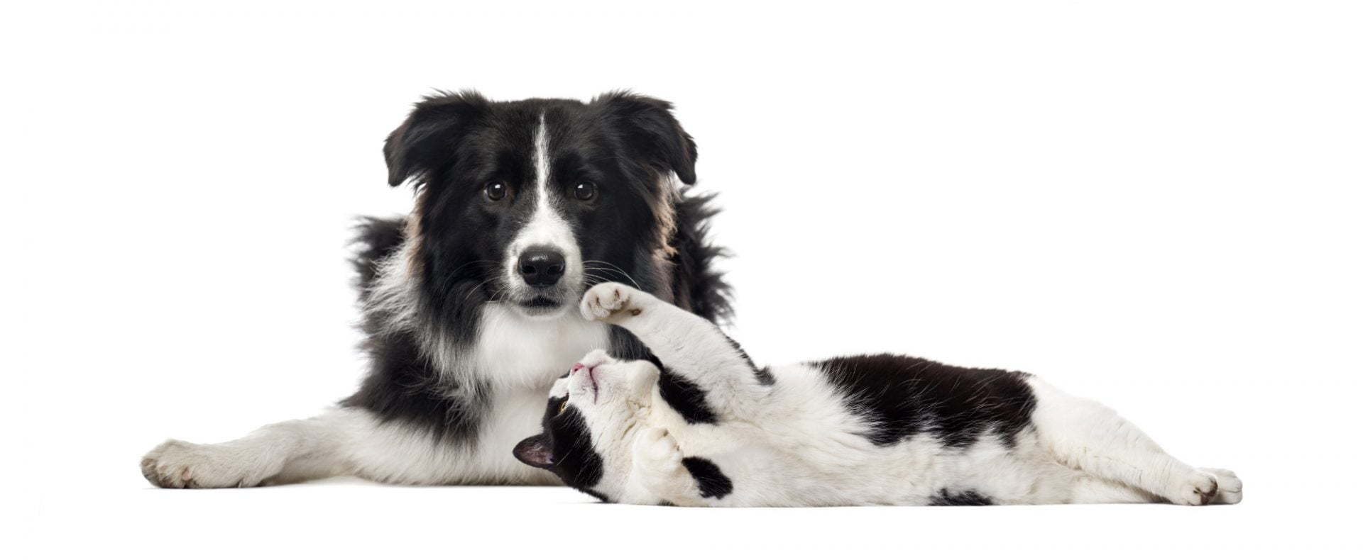 Kennel and cattery commercial insurance