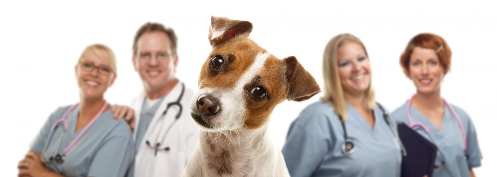 Vet and vet practice insurance